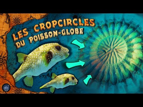 Les Cropcircles du poisson globe - CURIOSEA