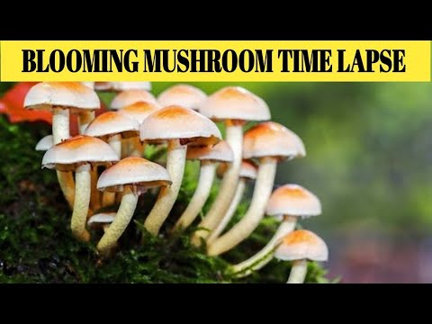 Blooming Mushroom Time lapse | Slow Motion |Must watch Video