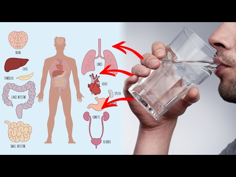 Thumbnail: 10 Health Benefits of Drinking Warm Water