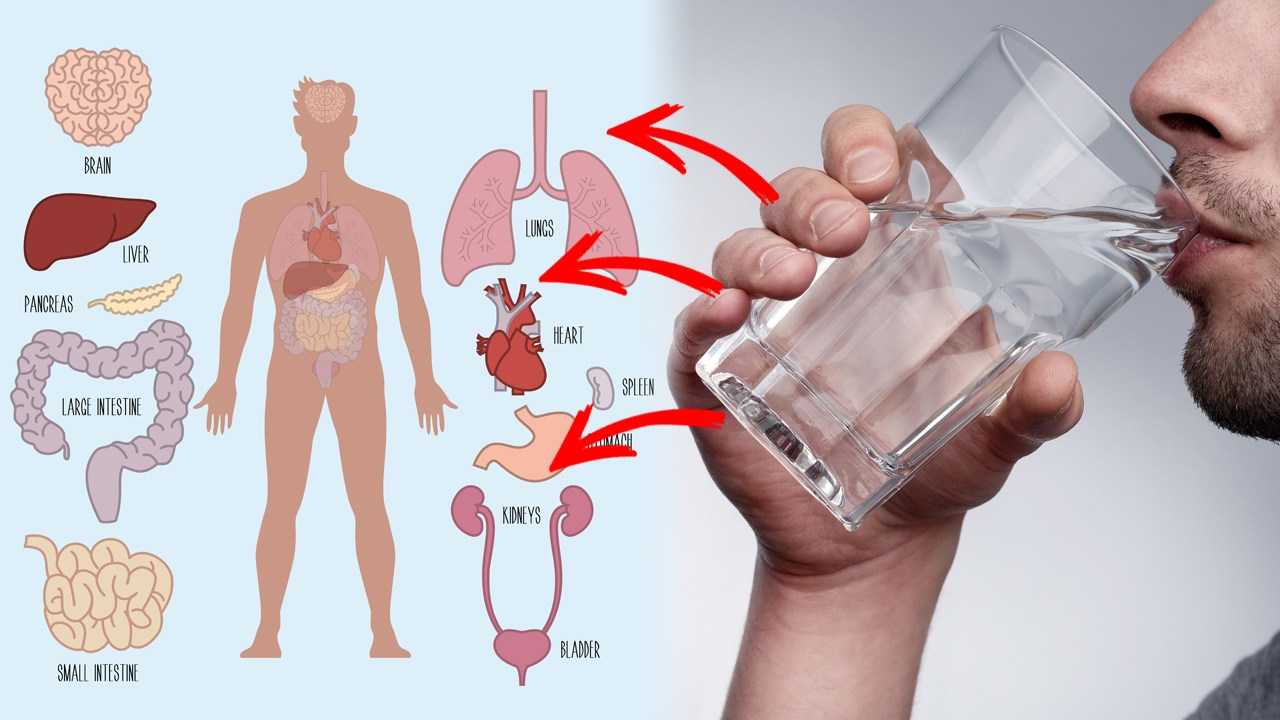 drinking water and health 3 introduction this document has been developed jointly by the drinking water inspectorate (dwi) and the health protection agency (hpa.