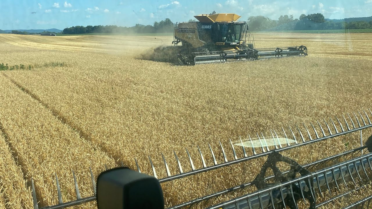 Harvesting Wheat With 2 Claas Lexion Combines