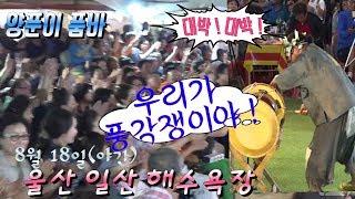 양푼이 품바 🌟 최다의 관객들^ 일산의 밤이 들썩 ! 광란^ 난리도 이런난리가 없네 ~ 앗~싸 ! 얼씨구!