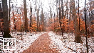 Walking in Light Rainfall in the Forest | Binaural Winter Rain Sounds 4k