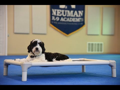 Oreo (Tibetan Terrier) Boot Camp Dog Training Video Demonstration