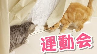 Funny cats compete with each other , which happens a few times a da...