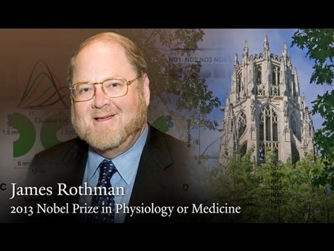 Yale's James Rothman shares 2013 Nobel Prize in Physiology or Medicine