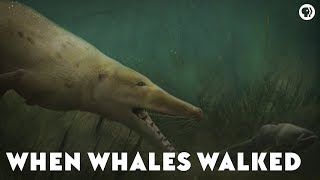 Download When Whales Walked Mp3 and Videos