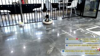 펫츠뷰 펫방 노래 스트리밍 라이브 소통 k-pop 케이팝 노래모음 강아지 dog puppy 댕댕이