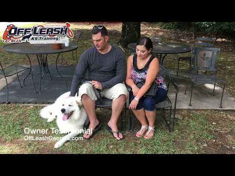 Client Testimonial | Great Pyrenees | Off Leash K9 Training, Georgia