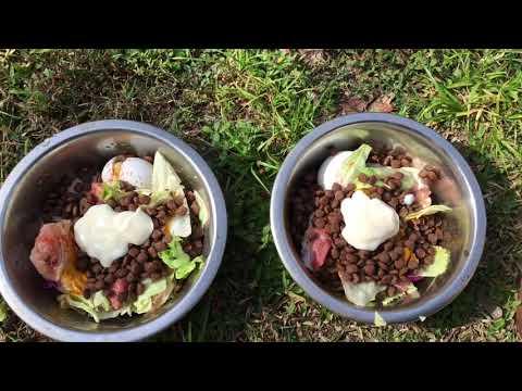 Raw Feeding My Pitbull Game dog Pt.3