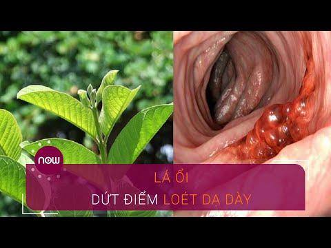 Lá ổi trị dứt điểm bệnh viêm loét dạ dày   VTC Now