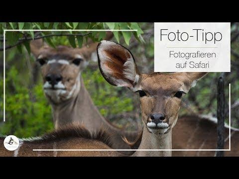 So fotografierst du richtig auf Safari | Foto Tipp