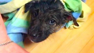 Подобрали бездомного щенка на Пасху ЧАСТЬ 1
