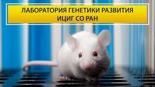 Как и зачем делать трансгенных животных? ДИКО ИНТЕРЕСНО! Большая Научная Экскурсия.