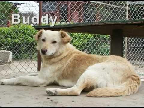 The KAT Centre Rescues Street Dogs in Kathmandu, Nepal