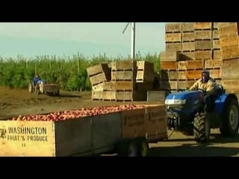 Farmers hope for better trade deals after TPP withdrawal
