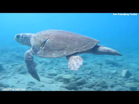 Caretta Caretta! /  İztuzu Beach / Turtle Beach / Scuba Diving