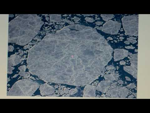 polar bears in hudson bay - climatology - brandon g and mark g