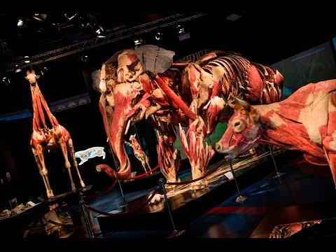 ANIMAL INSIDE OUT at Life Science Centre, Newcastle until 3 January 2017