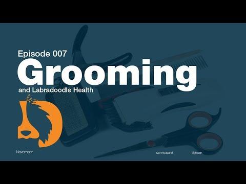 Grooming and Labradoodle Health-Blonde Brownies 7 Week Update