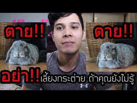 อย่าคิดแม้แต่จะซื้อกระต่ายมาเลี้ยง?? เพราะเค้าจะตายใน14 วัน!!(แนะนำวิธีการเลี้ยงกระต่าย)