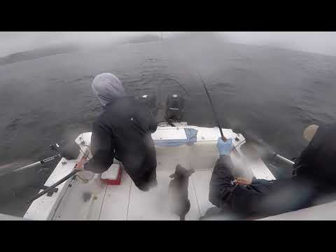 42 Lbs Chinook Salmon Released 2018 Port Hardy BC