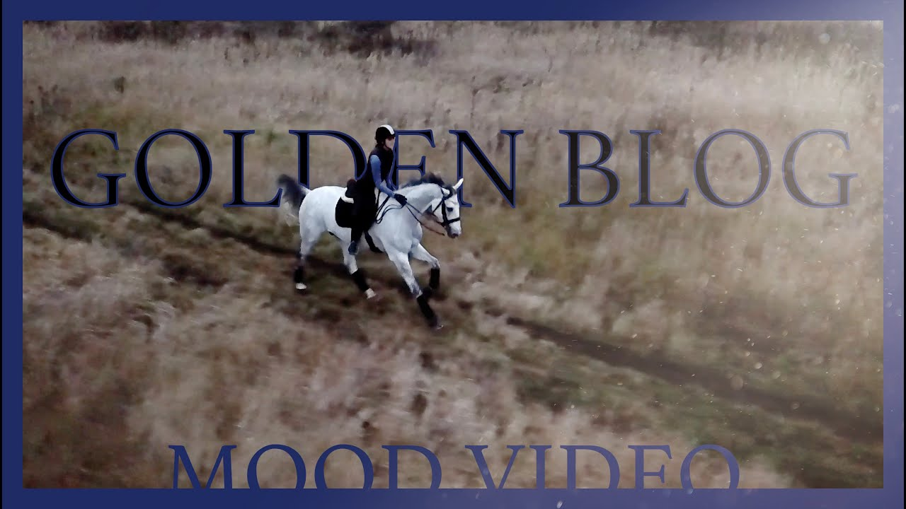 GOLDEN BLOG ✨ MOOD VIDEO