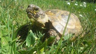 Mit Schildkröte Carl im Park | Kleines Tier- und Naturvideo :)