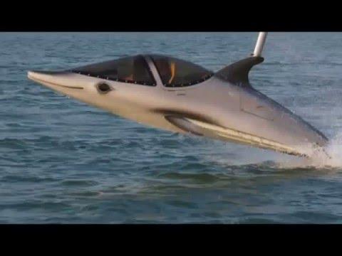 Катер дельфин