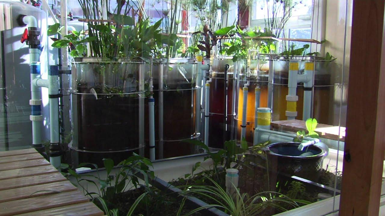 eco machine system