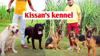 Kissan's kennel || Price difference in dogs 10k vs 50k || With KCI dogs VS without KCI dogs ||