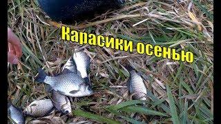 Карасики осенью. ➤ Караси на озере Ольховое ➤ Рыбалка рядом с Уфой