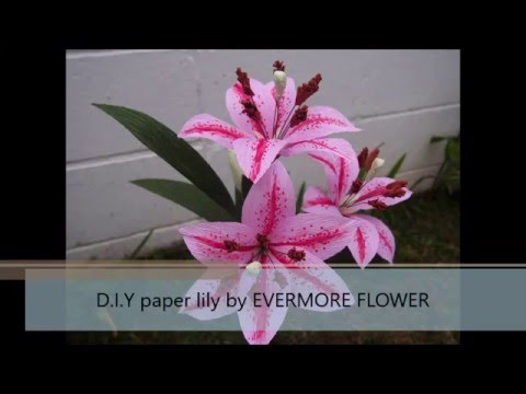 [SIMPLE] D.I.Y Paper lily by Evermore Flower