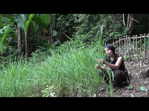 188 days of Find, Grow, Tend, Harvest and Enjoy Rice Plants - Wilderness Alone