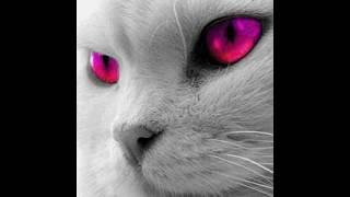 У котов бывают разные глаза