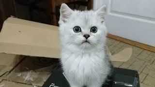 ЛУЧШИЕ ВИДЕО ПРО КОТЯТ 2019 😻 МИЛЫЕ КОТЯТА БЕСЯТСЯ И РЕЗВЯТСЯ 🐱 KITTEN Cat Animals