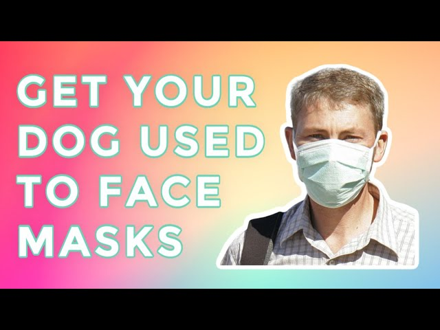 Getting your dog used to the new scary Face Masks during quarantine.