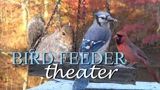 Bird Feeder Theater Nature Video Relax In Hd