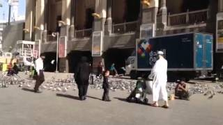 THE PIGEONS OF AL HARAM