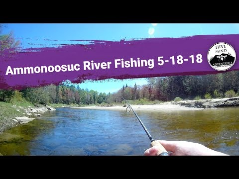 Trout Fishing On The Ammonoosuc River, Bethlehem NH, May 18 2018