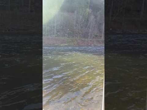 Caddis hatch  Pine creek pa