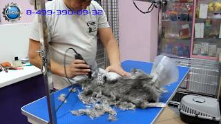 Шок! Стрижка кота! Такого не бывает. Grooming cats in Russia - Shock(, 2016-06-23T20:21:49.000Z)