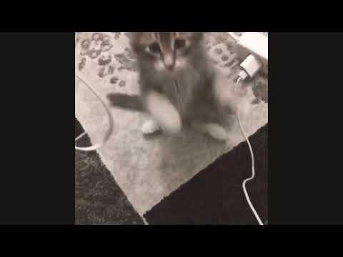KITTENS PLAYING SO CUTE - cute cat videos