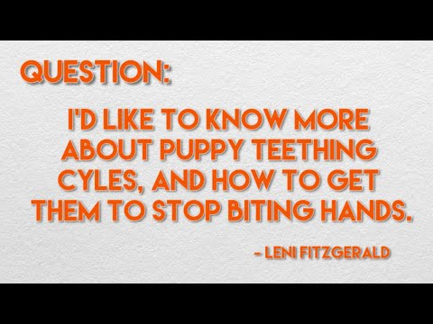 how-to-stop-puppies-from-biting---ask-dr.-andy