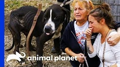 38 Dogs Saved From Horrific Conditions   Pit Bulls & Parolees