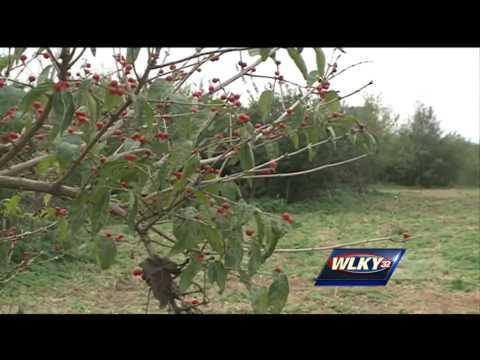 Botanical garden is planned near downtown Louisville