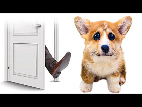 Выгнали ЩЕНКА КОРЖИКА из ДОМА!! (Хаски Бандит) Говорящая собака