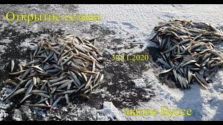 Открытие сезона зимней рыбалки 30 11 2020 малое Буссе