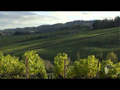 Atlas Vineyard Management Grapes Sales & Marketing
