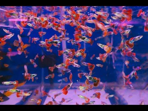 Aquarium Street in Ho Chi Minh City - Day 13 - Vietnam Travel Vlog